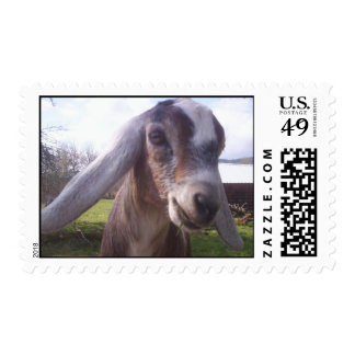 El sello del niño de la cabra de Nubian de CUANTO