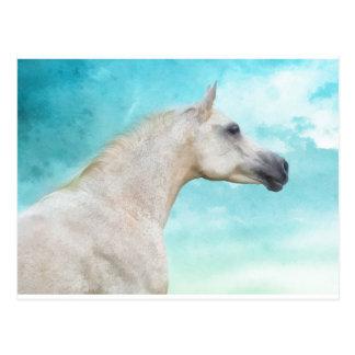 El semental blanco tarjetas postales