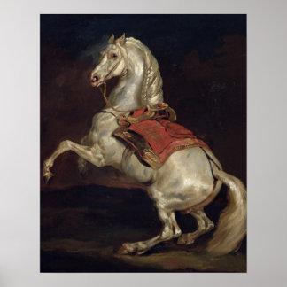 El semental de Napoleon, Tamerlan Póster