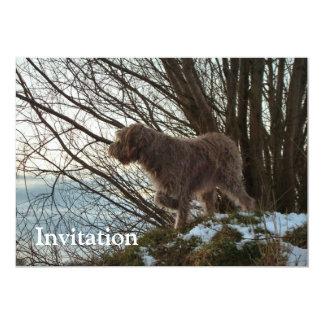 - El señalar de Korthals Griffon - de Tsjip Invitación 12,7 X 17,8 Cm