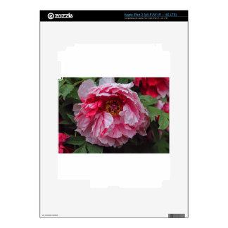 El Sensualist.JPG Pegatinas Skins Para iPad 3