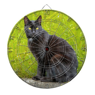 El sentarse del gato negro al aire libre