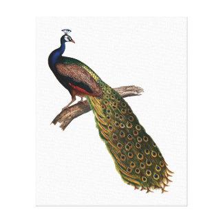 El simbolismo del pavo real impresión en lienzo estirada