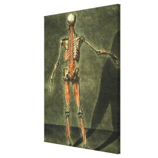 El sistema muscular profundo de la parte posterior impresión en lienzo