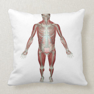 El sistema musculoesquelético 10 almohadas