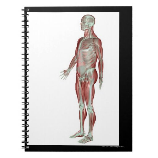 El sistema musculoesquelético 11 libros de apuntes