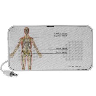 El sistema nervioso 2 sistema de altavoz