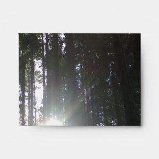 El sol en el bosque sobres