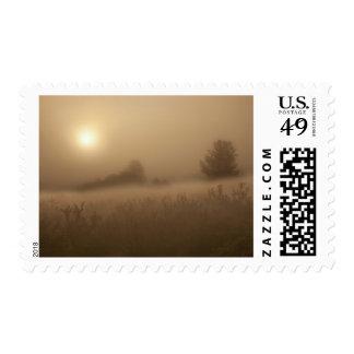 El sol penetra la niebla de la mañana sobre campo franqueo