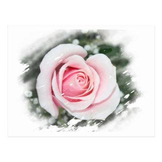 El solo rosa rosado se descoloró y frotó postal