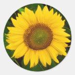 El solo verde del girasol deja la flor amarilla etiquetas redondas