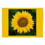 El solo verde del girasol deja la flor amarilla felicitacion