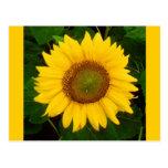 El solo verde del girasol deja la flor amarilla tarjetas postales
