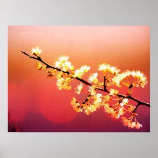 El soñador, flores de la primavera está floreciend poster
