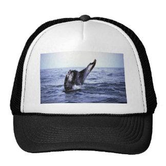 El sonar de la ballena jorobada (platijas de la co gorra