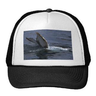 El sonar de la ballena jorobada (platijas de la co gorros