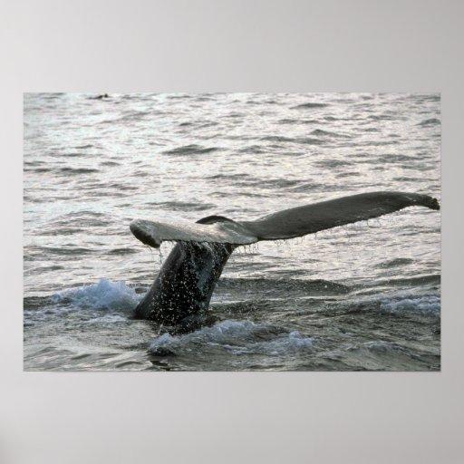 El sonar de la ballena jorobada (platijas de la co impresiones