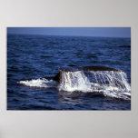 El sonar de la ballena jorobada (platijas de la co poster