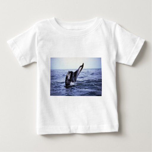 El sonar de la ballena jorobada (platijas de la tee shirt