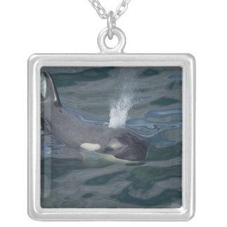 El soplar de la orca collar personalizado