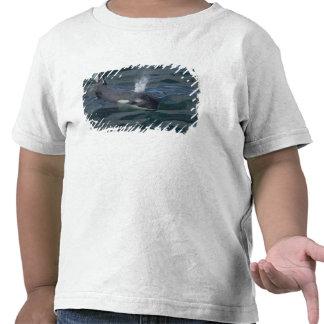 El soplar de la orca camisetas