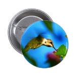 El sorber del colibrí pins