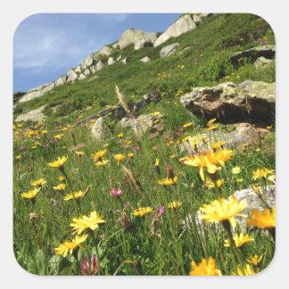 ¡El sorprender! Flores alpinas Pegatina Cuadrada
