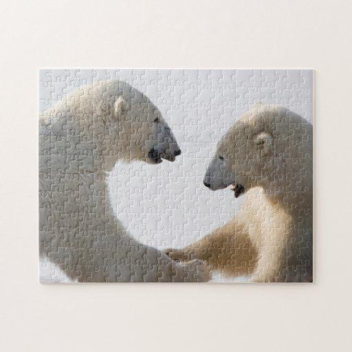 El sparring de los osos polares rompecabeza