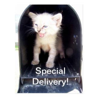 El Special entrega la postal del gatito