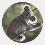 El subir lindo de la koala pegatinas