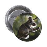 El subir lindo de la koala pin