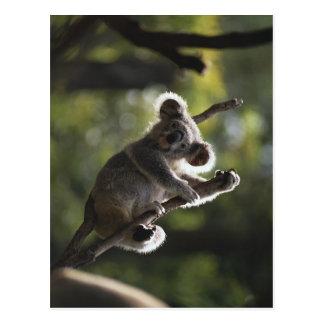 El subir lindo de la koala postal