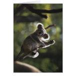 El subir lindo de la koala tarjetas