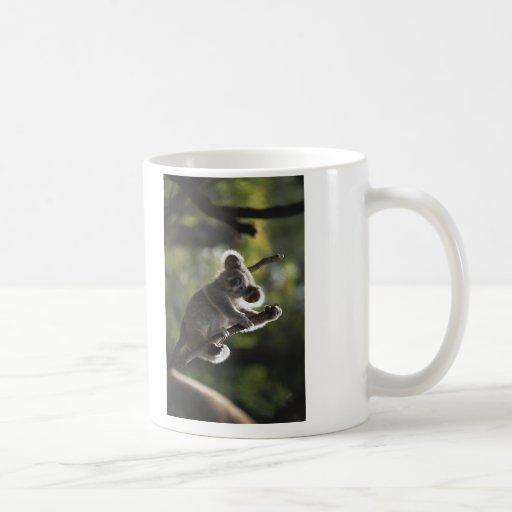 El subir lindo de la koala tazas