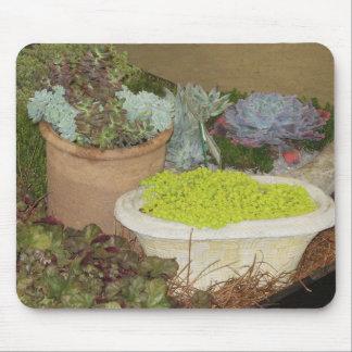 El succulent colorido planta Mousepad Alfombrilla De Ratones