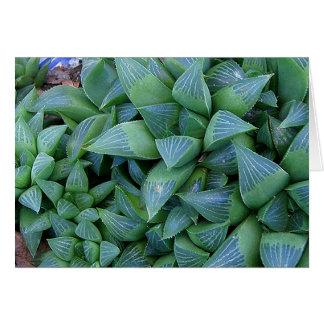 El Succulent de Haworthia planta la tarjeta de