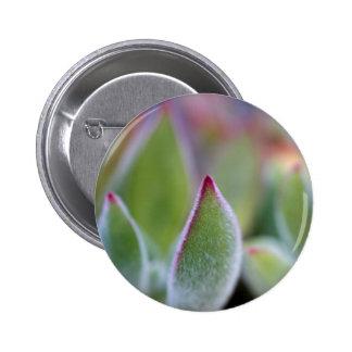 El Succulent verde borroso sale de macro Pin Redondo De 2 Pulgadas
