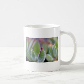 El Succulent verde borroso sale de macro Taza Clásica