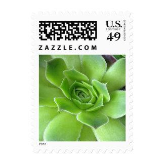 El Succulent verde planta sellos