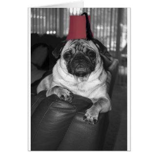 El sultán del sofá tarjetas