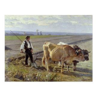 El surco, 1897 postales