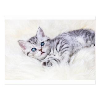 El tabby de plata joven manchó el gato que mentía tarjetas postales