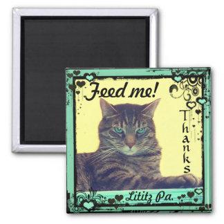 ¡El tabby del imán de las inspiraciones del gatito