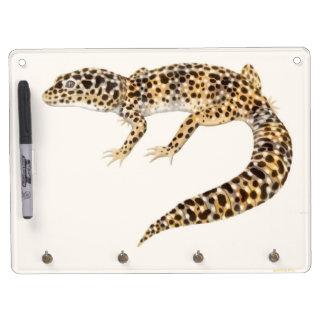 El tablero seco del borrado del lagarto del Gecko  Tableros Blancos