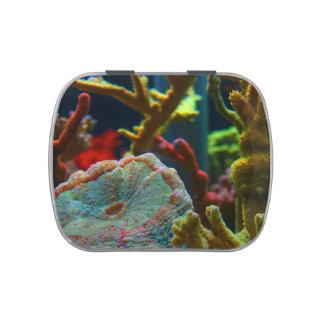 el tanque coralino del acuario de la imagen del ag latas de caramelos