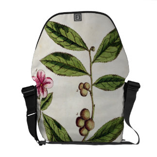 """El té verde, platea 351 """"de un herbario curioso"""",  bolsas de mensajería"""