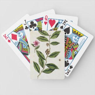 """El té verde, platea 351 """"de un herbario curioso"""",  baraja cartas de poker"""