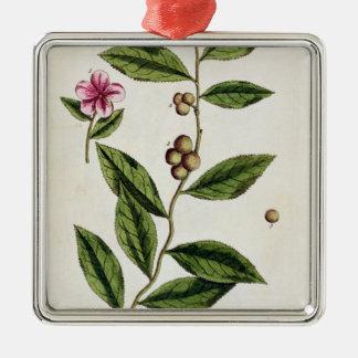 """El té verde, platea 351 """"de un herbario curioso"""",  adornos de navidad"""