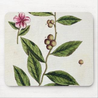 """El té verde, platea 351 """"de un herbario curioso"""",  alfombrilla de ratón"""