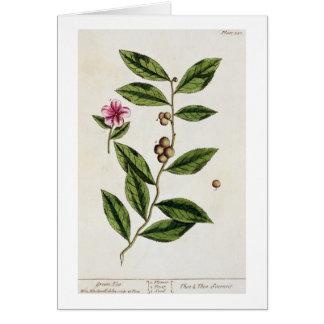 """El té verde, platea 351 """"de un herbario curioso"""",  tarjeta de felicitación"""